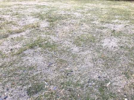新築当時の芝